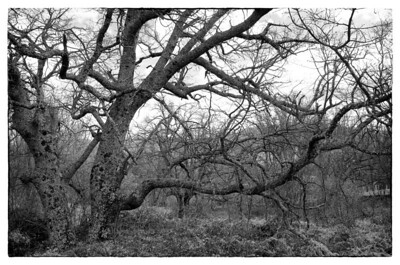 Laberinto arbóreo.