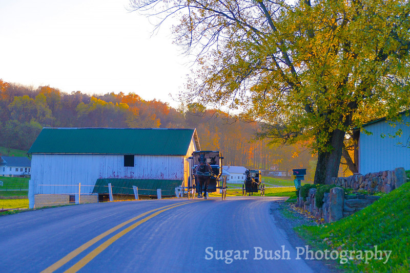 Amish Buggies near Charm, Ohio