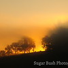 Foggy Sunrise, Walnut Creek, Ohio
