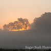 Foggy Sunrise, Walnut Creek, Ohio