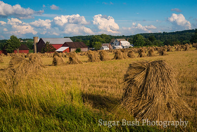 Amish Farm and Oat Shocks
