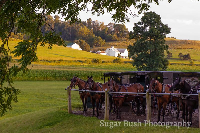 Amish Horses and Farm - Walnut Creek