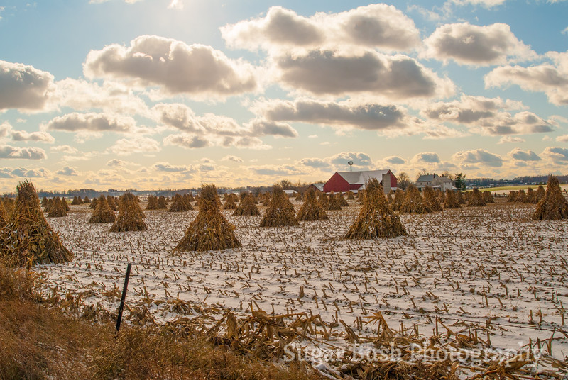Snowy Amish Farm with Corn Shocks