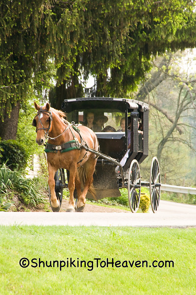 Amish Buggy, Coshocton County, Ohio