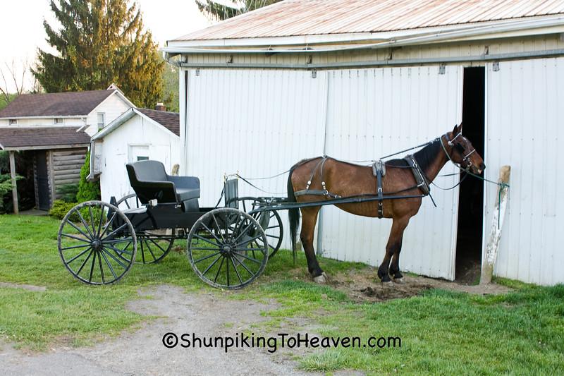 Amish Horse and Buckboard, Holmes County, Ohio