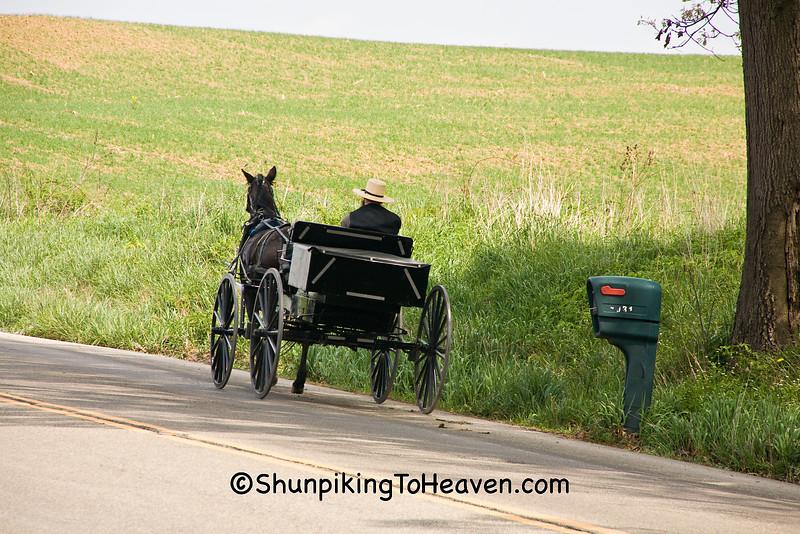 Amish Buckboard Wagon, Holmes County, Ohio