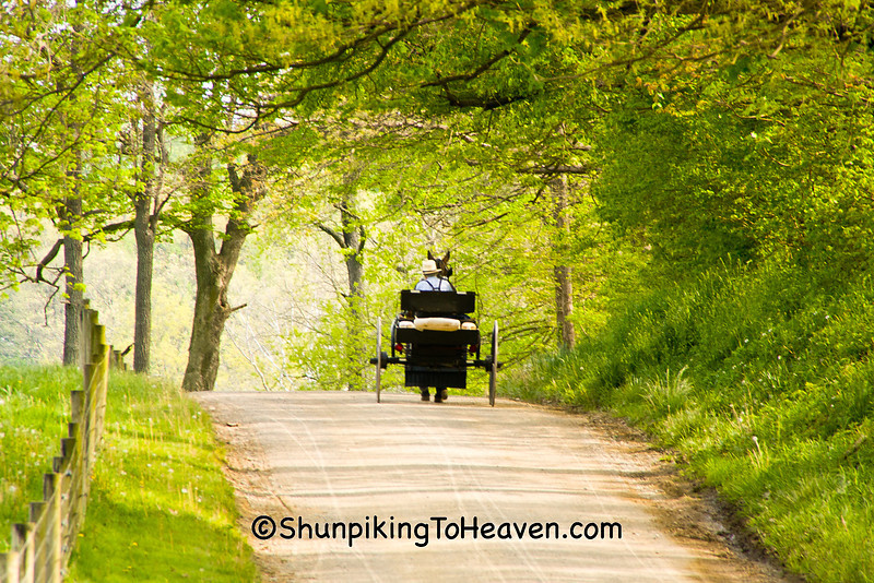 Amish Buckboard Wagon, Coshocton County, Ohio