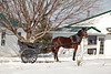 Amish Horse and Buggy, Richland County, Wisconsin