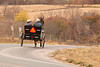 Amish Buggy, Vernon County, Wisconsin