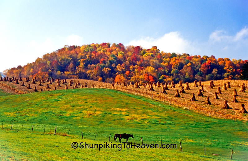 Autumn Tapestry in Amish Country, Vernon Co., Wisconsin