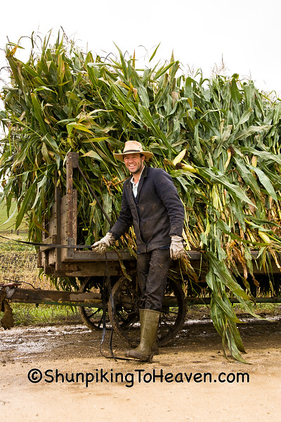 Amish Farmer with Corn Harvest, Winona County, Minnesota