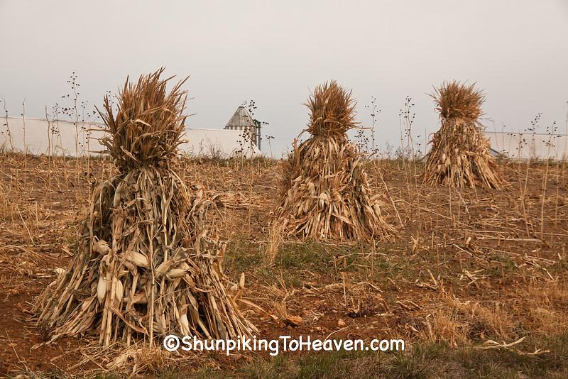 Corn Shocks on Amish Farm, Vernon County, Wisconsin