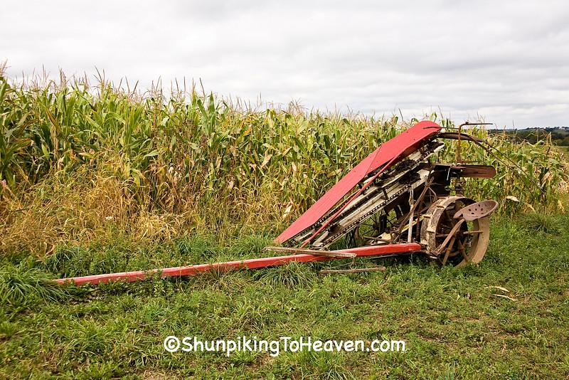Horse Drawn Corn Binder for Amish Corn Harvest, Vernon County, Wisconsin