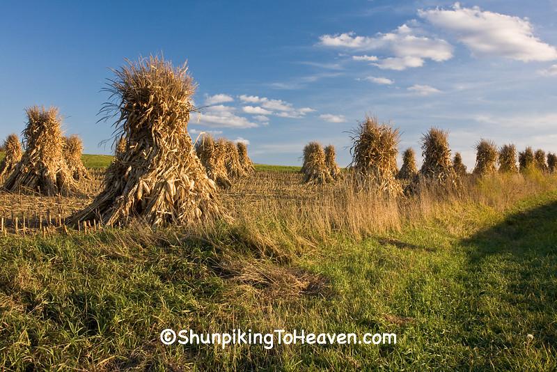 Amish Corn Shocks, Sauk County, Wisconsin