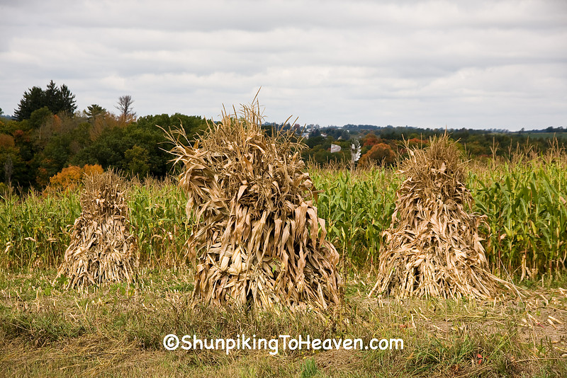 Corn Shocks on Amish Farm, Vernon County, Wisconsin