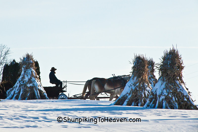 Amish Horse-Drawn Manure Spreading, Vernon County, Wisconsin