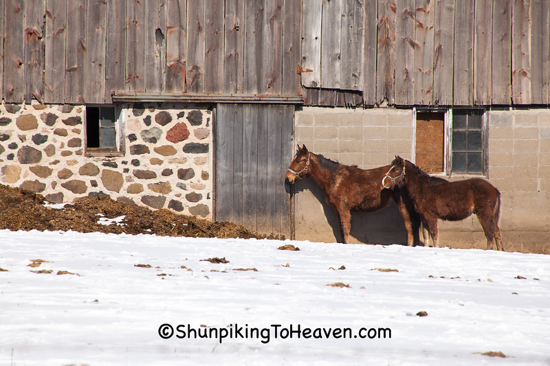 Amish Barn and Horses, Marquette County, Wisconsin