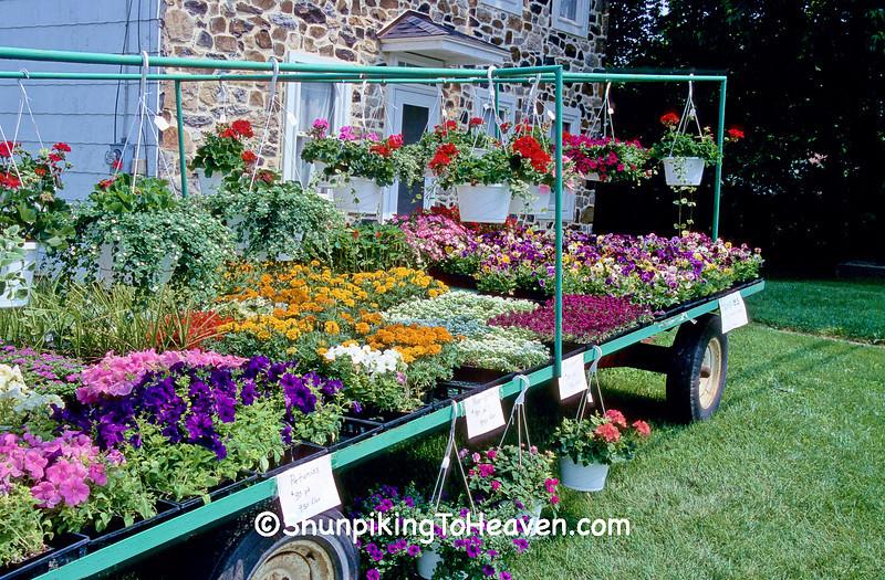 Flower Wagon on Amish Farm, Lancaster County, Pennsylvania