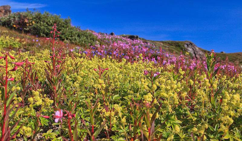 """Αμμασσαλίκ (ΓΡΟΙΛΑΝΔΙΑ). Η """"Κοιλάδα των Λουλουδιών"""""""