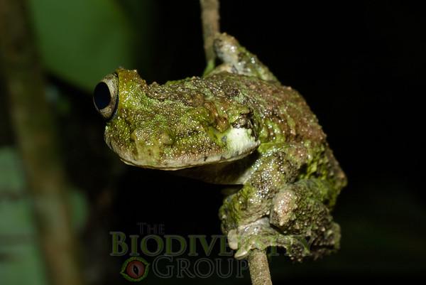 Biodiversity Group, IMGP5633