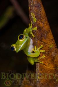 Biodiversity Group, DSC05328