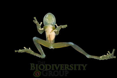 Biodiversity Group, DSC05594