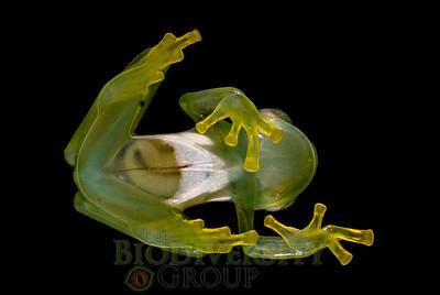 Biodiversity Group, _DSC1310