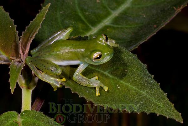 Biodiversity Group, _DSC0513