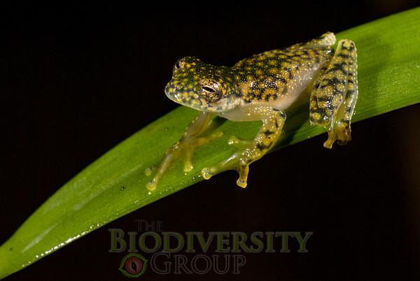 Biodiversity Group, DSC05701