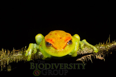 Biodiversity Group, _MG_3982