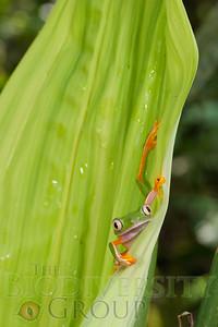 Biodiversity Group, _DSC8599