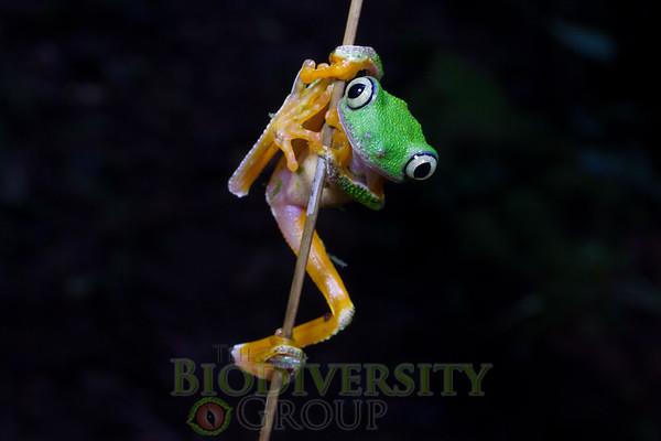 Biodiversity Group, _MG_2356