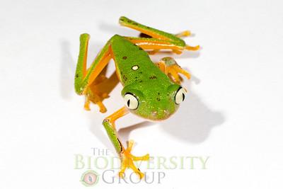 Biodiversity Group, _MG_0534