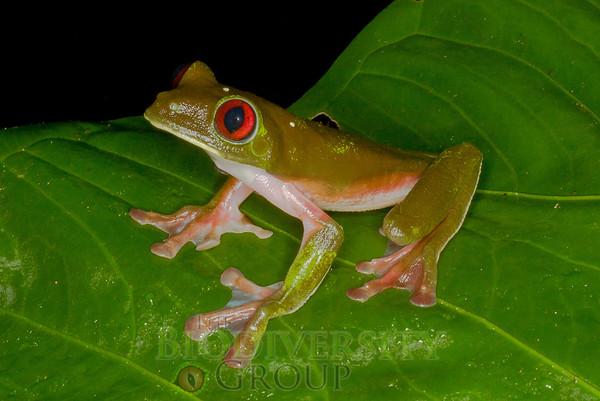 Biodiversity Group, IMGP7722