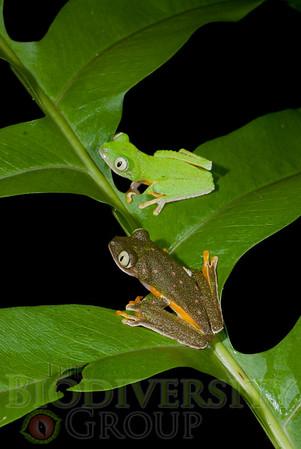 Biodiversity Group, DSC02782