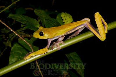 Biodiversity Group, IMG_0127