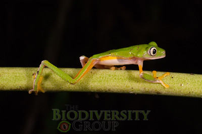Biodiversity Group, _DSC8650