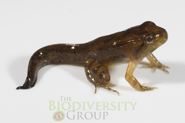 Biodiversity Group, _MG_0551