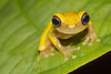 Biodiversity Group, DSC00437