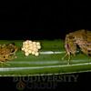 Biodiversity Group, DSC08344