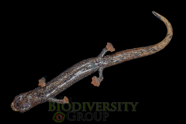 Biodiversity Group, _DSC5053