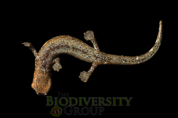 Biodiversity Group, _MG_0393