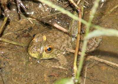 Taken with my 20D+200 f/2.8L II Lens+1.4x TC. Ain't this little Toad cute? Haha!