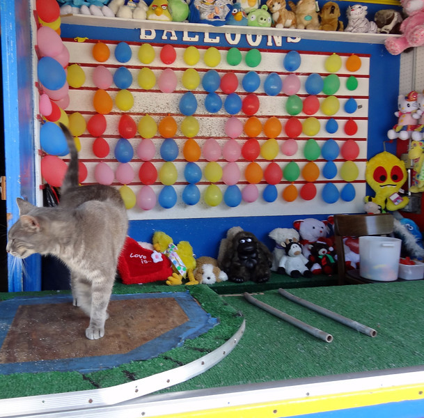 6/23/12 - Target the cat