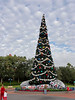 Disney Hollywood's Studio's main Christmas tree.