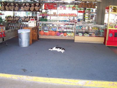 Yes, even the cats are lazier here in Oklahoma.