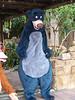 Baloo the bear at Animal Kingdom