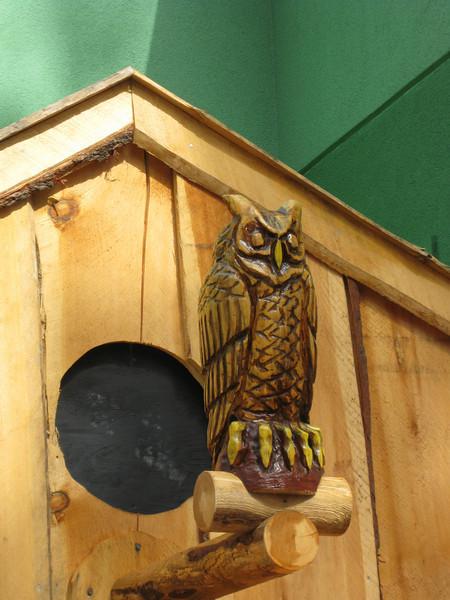 I hope the owl doesn't frighten away little birds.