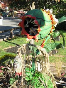 A carnivorous plant.