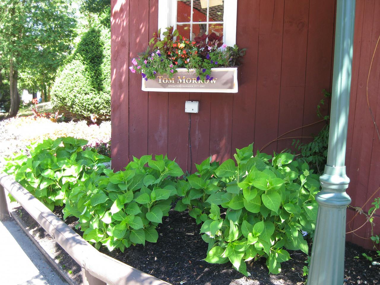 Tom Morrow memorial hydrangea garden.
